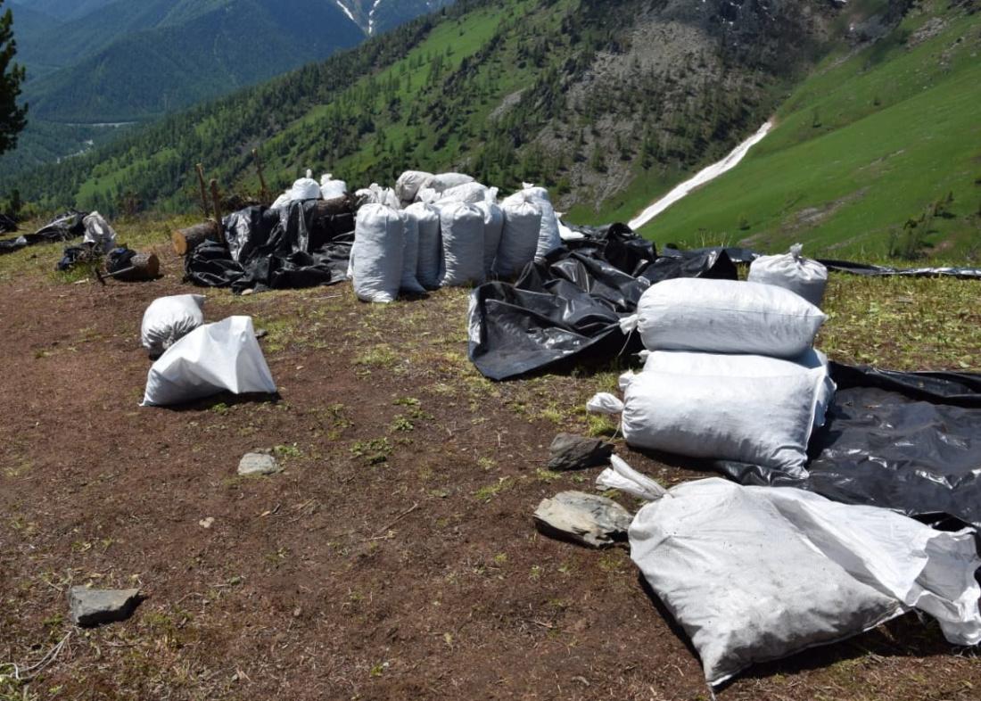 Майя Загорская: в Республике Алтай ведется незаконная добыча растений, занесенных в Красную книгу