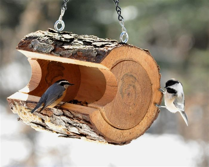 Липецкое региональное отделение РЭО запустило конкурс кормушек «Птичий переполох» в рамках акции «Покормите птиц зимой!»