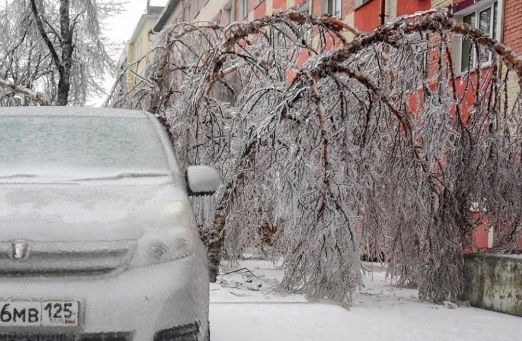 Во Владивостоке создана рабочая группа по восстановлению древесно-кустарниковой растительности города после ледяного дождя