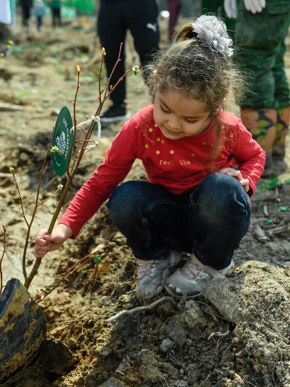 Уже 22 миллиона деревьев высадили участники акции «Сад памяти»