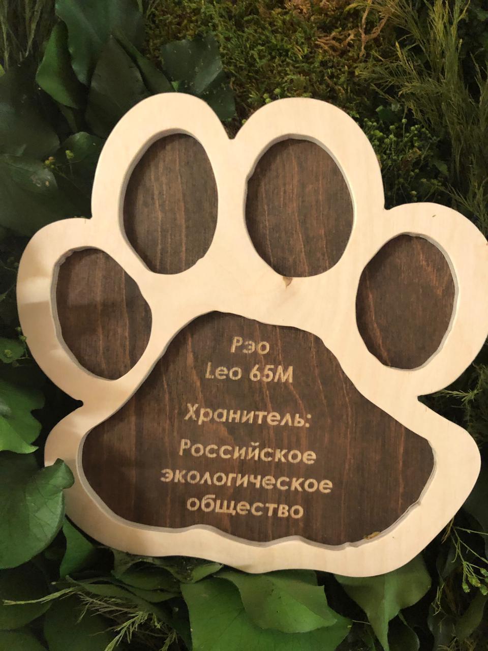 Российское экологическое общество стало Хранителем Леопарда по имени Рэо