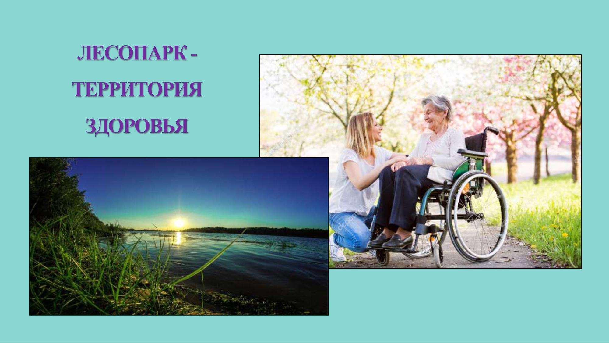 Виолетта Чёрная предложила объединить проекты регионов России, связанные с возрождением дубрав