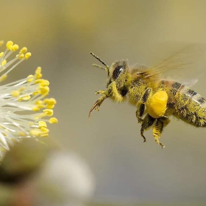 Сергей Тастан: Пчела - экологический индикатор жизни на Земле