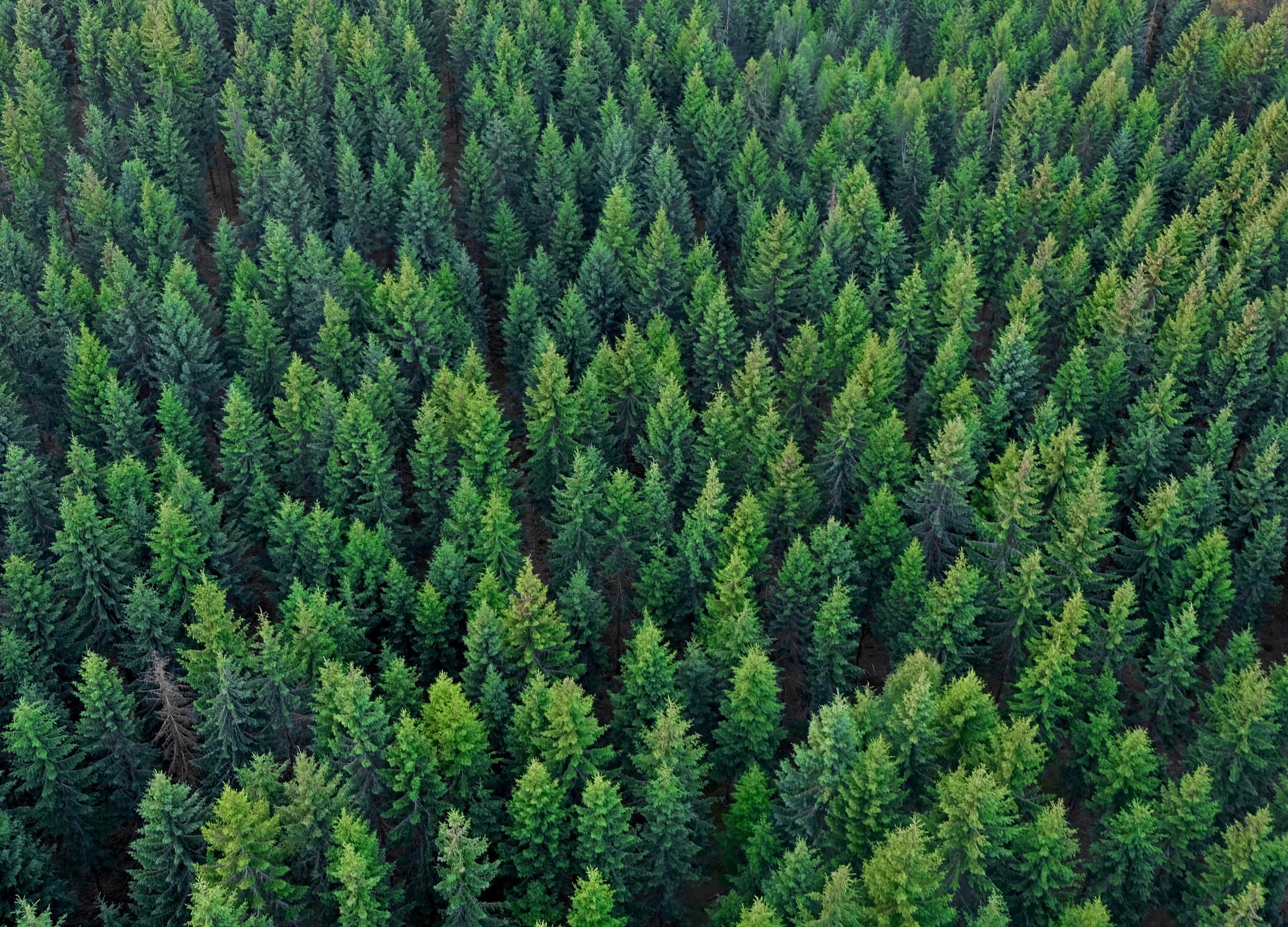 Тему сохранения лесов обсудили в Российском экологическом обществе