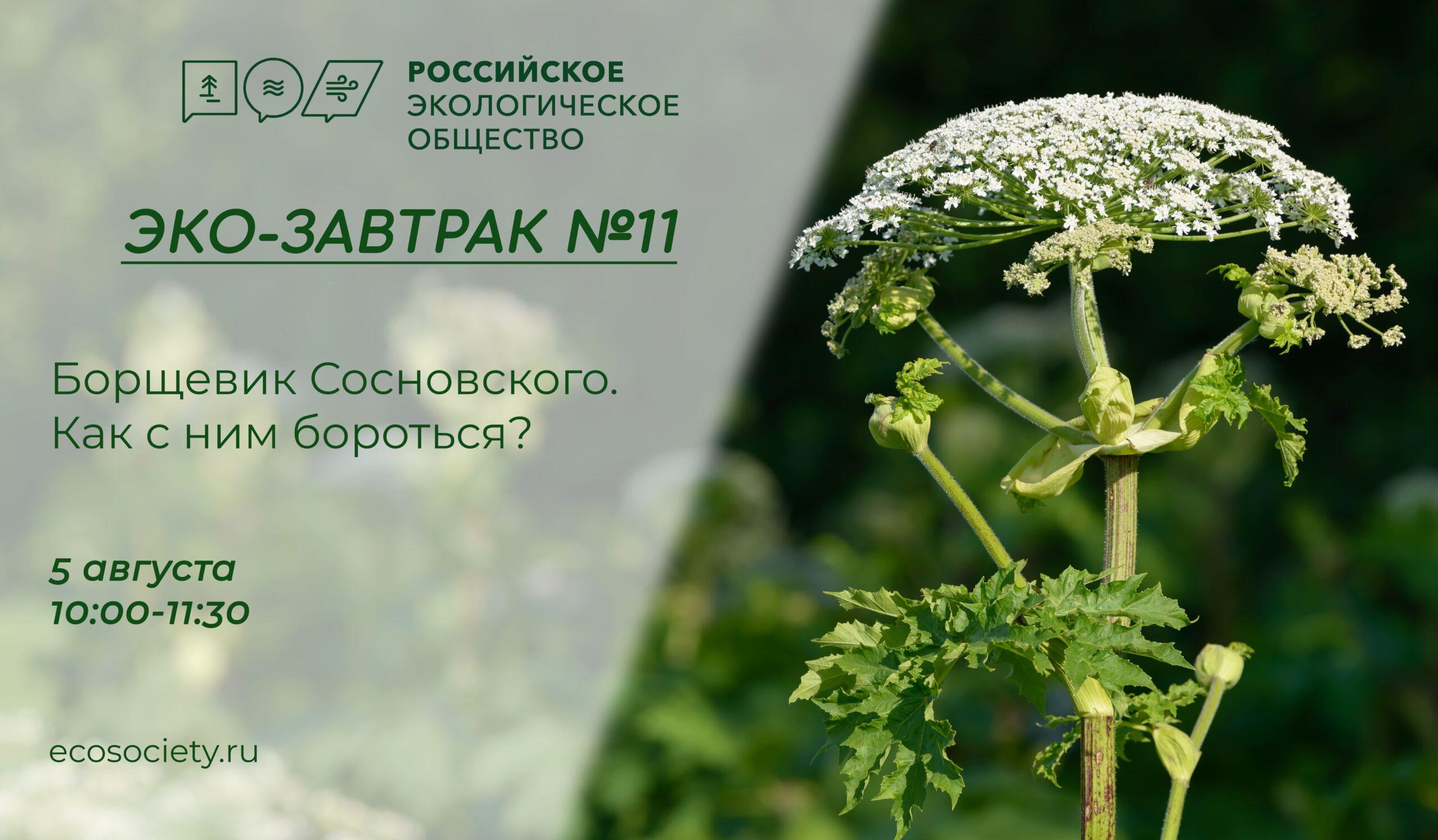 В Российском экологическом обществе состоится Эко-завтрак на тему «Борщевик Сосновского. Как с ним бороться?»