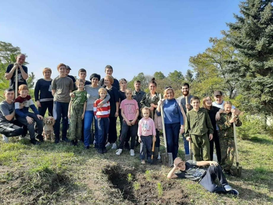 В Кисловодске высадили аллею из сибирских кедров